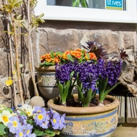Variety of spring flowers on sun terrace at front of house