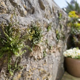 Korean Fern in wall at front of house