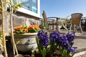Spring flowers on the sun terrace